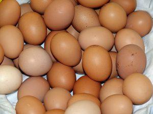 Egg Protein Supplements