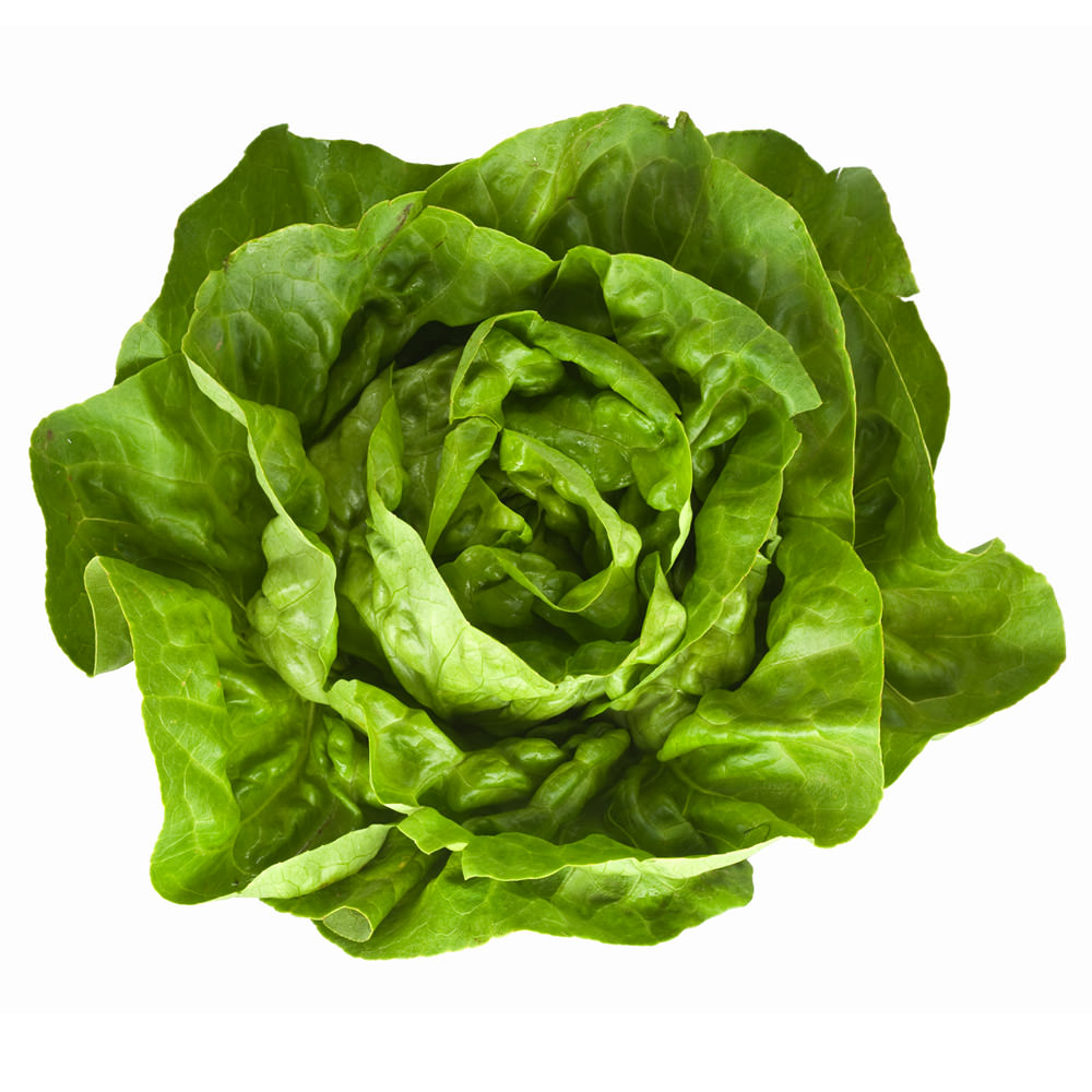 All About Lettuce : Types, Nutritional Value And Smoothies lettuce-butterhead