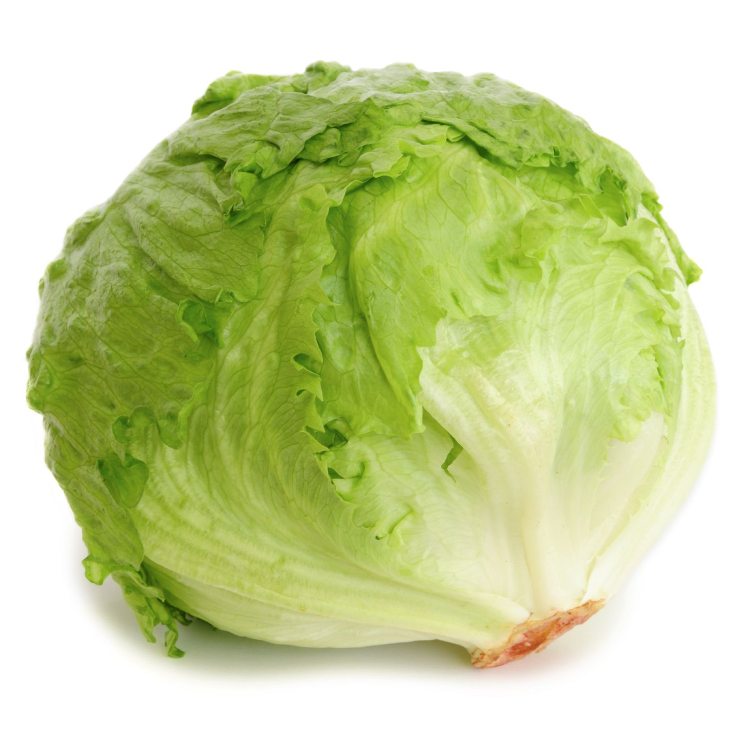 All About Lettuce : Types, Nutritional Value And Smoothies lettuce-crisphead