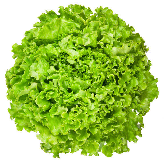 All About Lettuce : Types, Nutritional Value And Smoothies lettuce-looseleaf