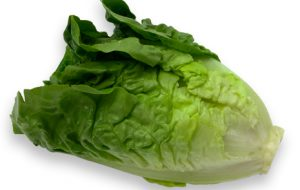 All About Lettuce : Types, Nutritional Value And Smoothies lettuce-romaine